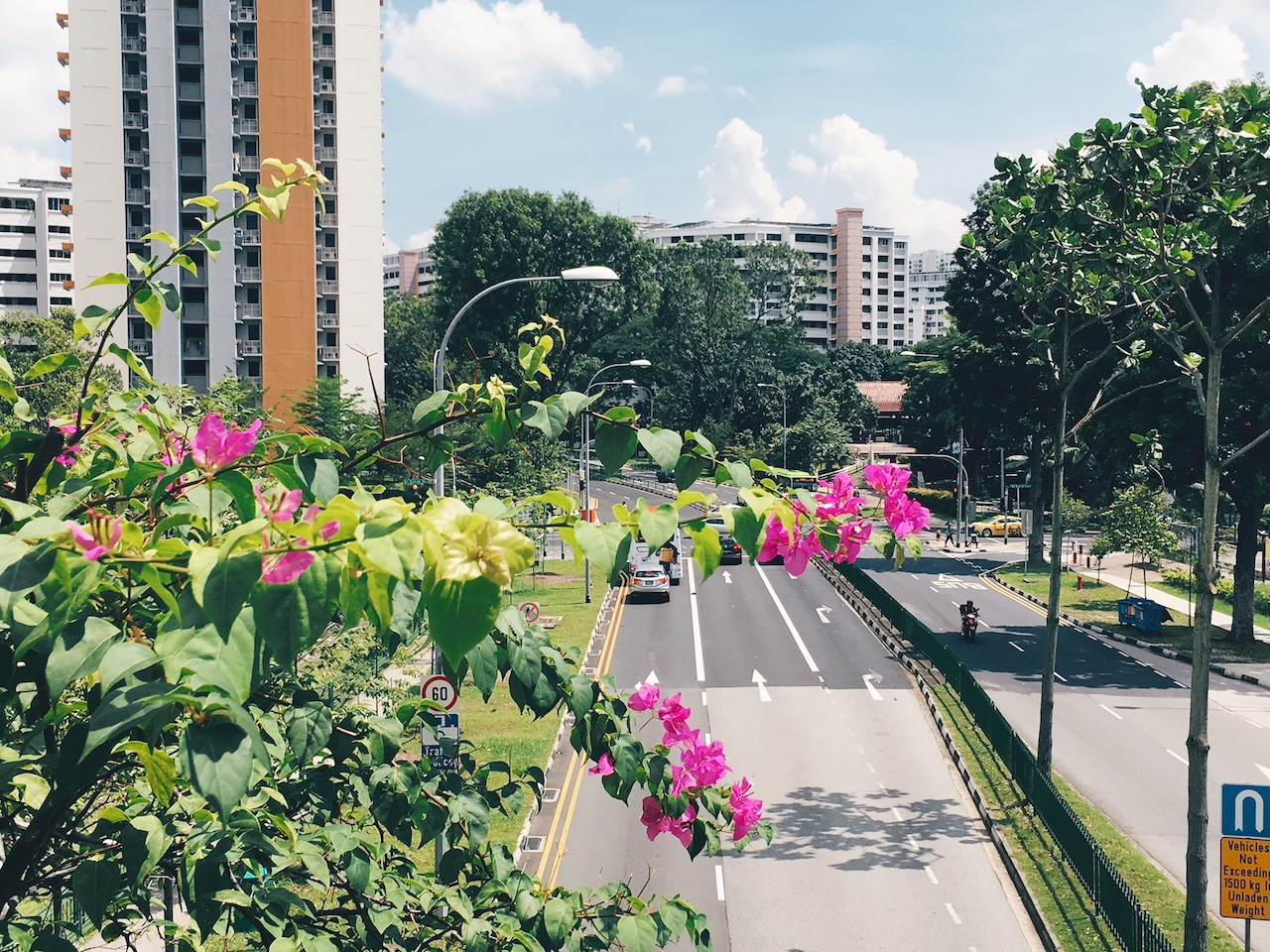 Unpopular Opinion: The Bougainvillea is Our True National Flower