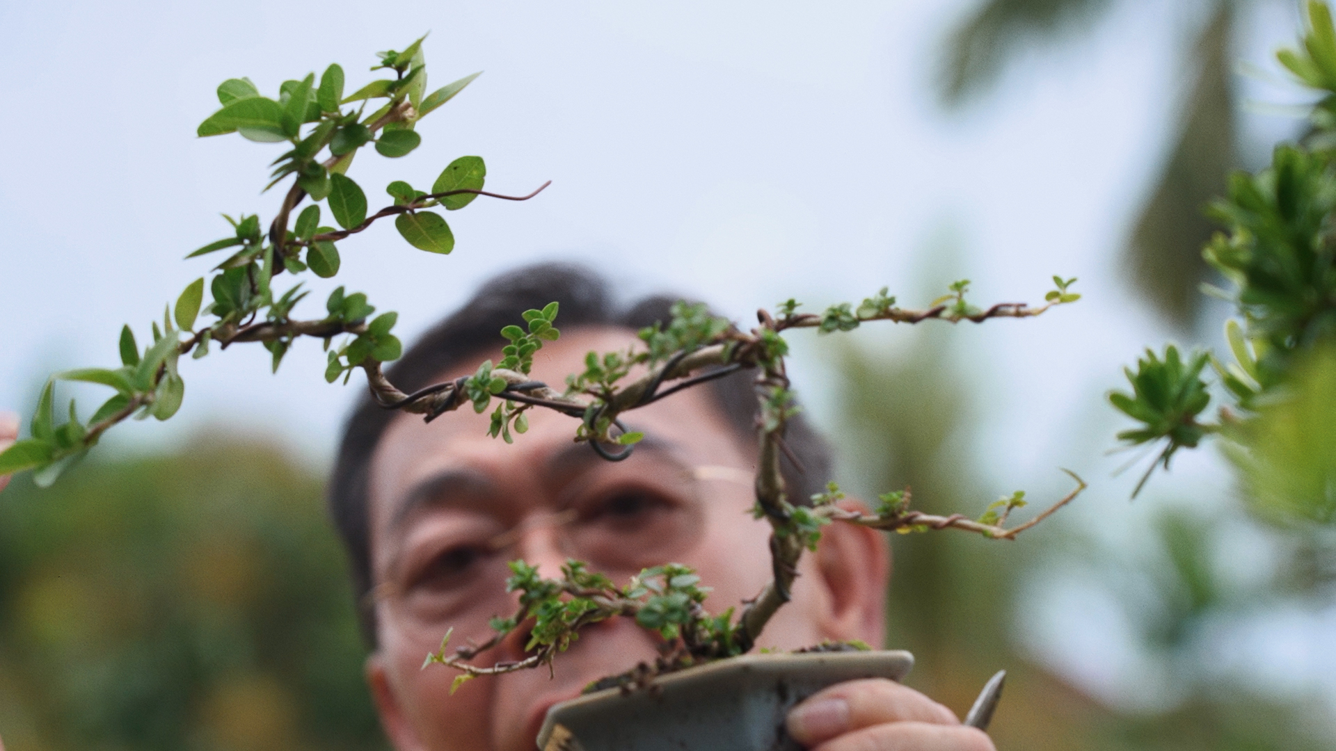 Here's What a Bonsai Master Taught Us About Pandemic Fatigue